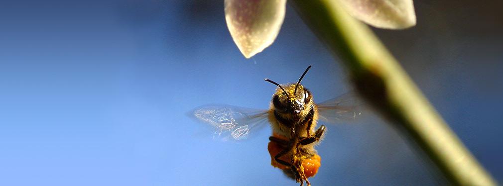 Le api in tutto il mondo sono in pericolo: c'è speranza per il futuro del pianeta?