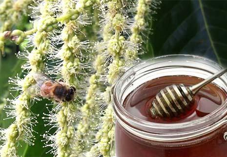 miele di castagno proprietà e benefici